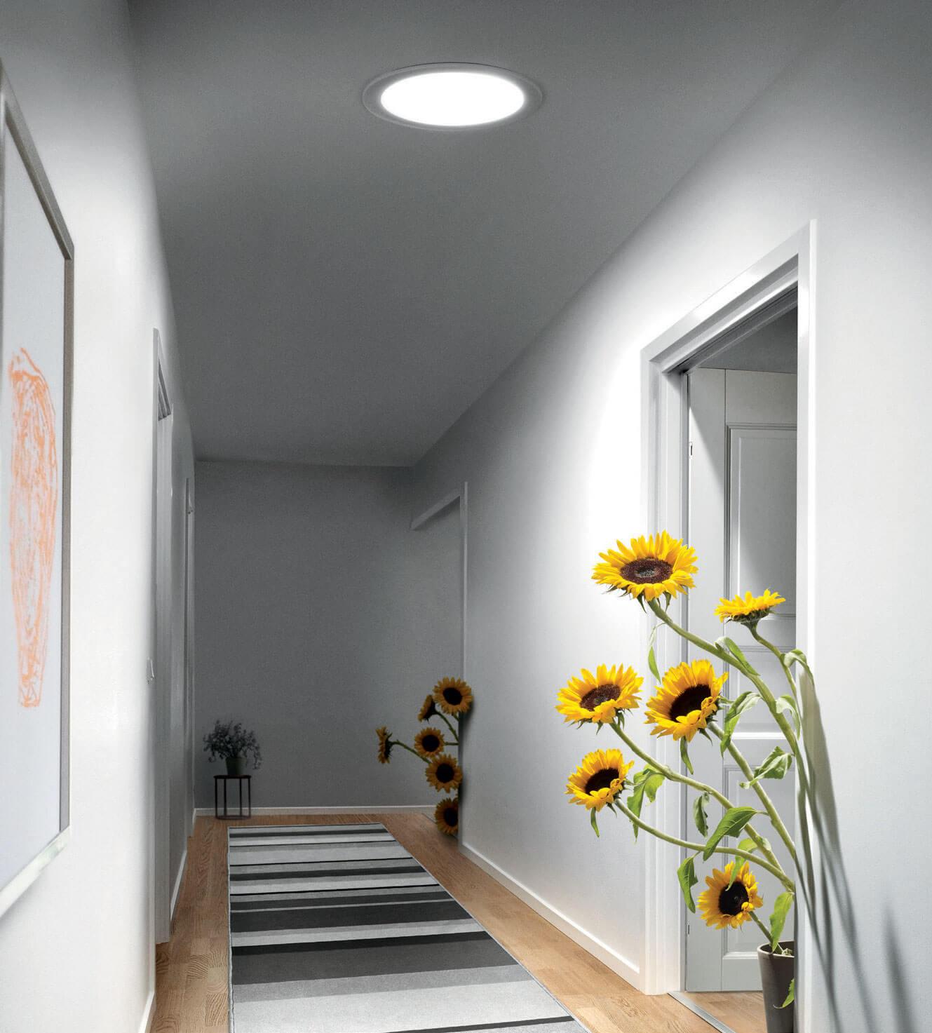 sunflower-vert